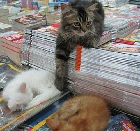 書店之寶 動物「書僮」比書吸引人
