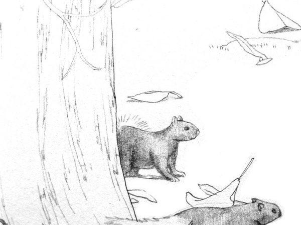 大安森林公園有松鼠家族:D