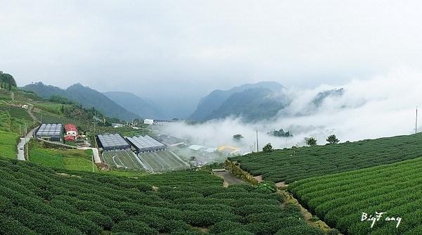 *週三來吃喝:避暑勝地【阿里山】二延平步道+頂石棹步道