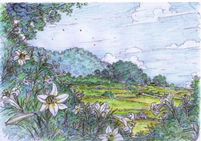 山盞花開遍的山腳