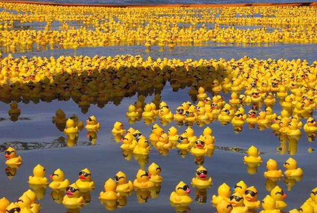 金罵沒ㄤ的黃色小鴨要加倍奉還!