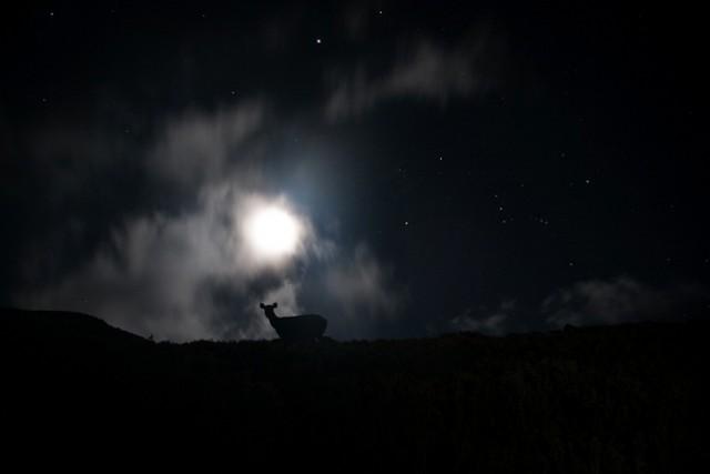 夜晚的精靈
