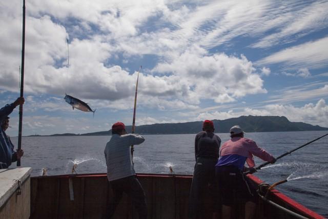 一支竿子愈釣愈多魚─綠島鰹竿釣