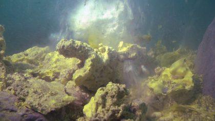 烏龜怪方蟹怎麼活在強酸又高毒性的環境?