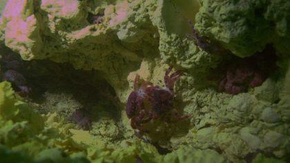 深海熱泉生態系和淺海熱泉生態系有什麼不同?