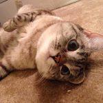 娜拉萌貓表情大崩壞