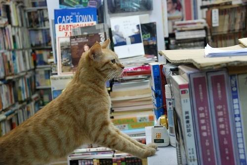 招財貓藏身處?地底下的黃金屋「森記圖書」