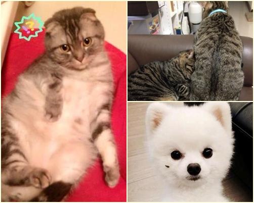 他們樂當寵物奴 林逸欣為愛貓DIY不怕傷玉手啦~