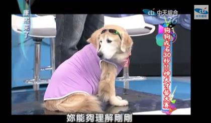 【2014.06.16】狗狗成名30秒!神犬才藝大賽!