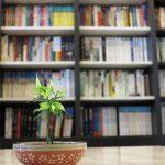 細細呵護幼苗的書店─「恋風草青少年書房」